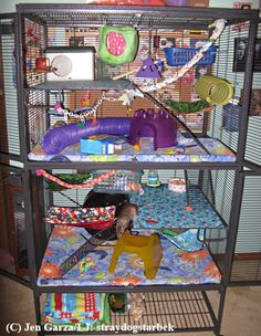 This is the exact cage my rats had. I had the covers, blankies and toys in it too. They LOVED it!