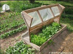 This mini-greenhouse is perfect for the yard