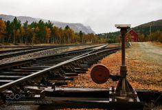 Tracks...