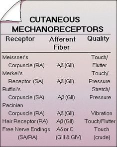 """These mechanoreceptors must be """"plugged into"""" the nervous system for faster, greater, more permanent healing. This is the advantage of what we do here at The Healing Centre."""