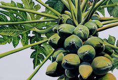 Tropical fruit painting www.janesinclair.co.nz