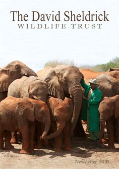 Go to the David Shedrick Wildlife Trust...this would mean everything to me!