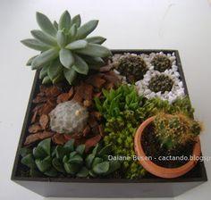 Jardim de Suculentas, Cactos e Terrario / Succulents