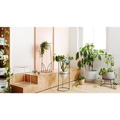 Launched in Spring of 2014, IVY MUSE is a botanical wares studio based in Melbourne. We design beautiful, functional plant stands.