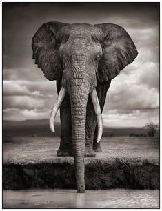 African+Bo | África de Nick Brandt