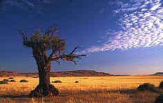 Google Image Result for http://www.thesafaricompany.co.za/images/Namibdesert.jpg