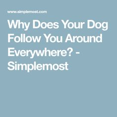 Why Does Your Dog Follow You Around Everywhere? - Simplemost