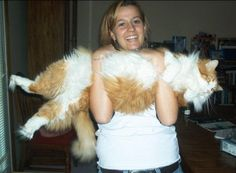 Remember that photo that went around the internet a few years ago with that lady holding the monster cat like this? ... Here is me with Pootie. <3