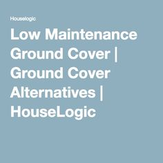 Low Maintenance Ground Cover   Ground Cover Alternatives   HouseLogic