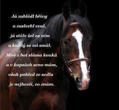 Equestrian Quotes, Texts, Bude, Horses, Humor, My Love, Animals, Smile, Animales