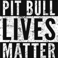 Uplifting So You Want A American Pit Bull Terrier Ideas. Fabulous So You Want A American Pit Bull Terrier Ideas. Pitbull Facts, Dogs Pitbull, Pitt Bulls, Bull Terrier Dog, Terriers, Pit Bull Love, Dog Quotes, Dog Life, I Love Dogs