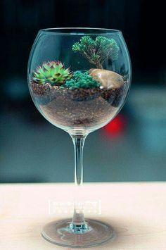 Interesting terrarium