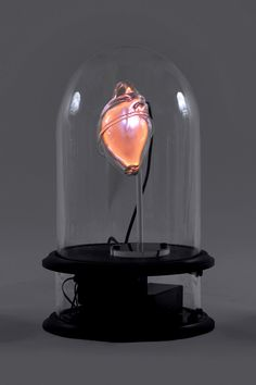 Heart : neon by Jessica Lloyd-Jones Photo Credit CC/Nick Moss
