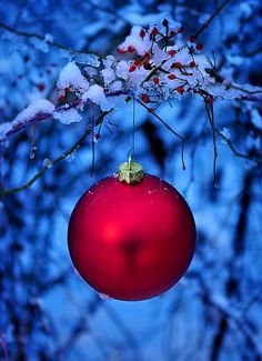 ** Red and blue christmas Christmas Time Is Here, Merry Little Christmas, Noel Christmas, Country Christmas, Christmas Colors, Winter Christmas, All Things Christmas, Christmas Bulbs, Christmas Decorations