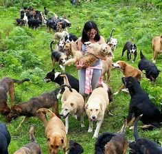 Is the Land of Strays the Greatest Dog Shelter in the World? http://www.viralone.com/land-strays-greatest-dog-shelter-world/?utm_campaign=coschedule&utm_source=pinterest&utm_medium=Viral&utm_content=Is%20the%20Land%20of%20Strays%20the%20Greatest%20Dog%20Shelter%20in%20the%20World%3F