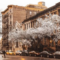 "nythroughthelens:  "" Spring icing sugar  Upper East Side, New York City  """