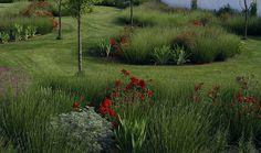 Rosa ' La Sevillana ', Lavandula sp., Artemisia, Iris, Erisymum ' Bowles Mauve ' Jardín Salamanca. Plantación de aromaticas y vivaz. Especies mediterraneas.