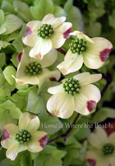 Dogwood is the state flower of North Carolina.
