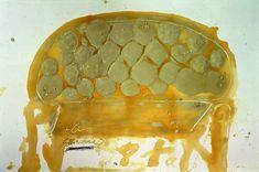 Antoni Tàpies, Sofa, 1989, Vernis et crayon sur bois, 200 x 300 cm, Collection privée, Barcelone © Fundacion Antoni Tàpies / ADAGP, Paris, 2012