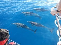 A dolphin tour like no other! Come with Dolphin Swim Australia and swim with wild dolphins. This is an adventure activity not to be missed!