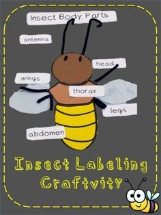 This simple craft will assess your students knowledge of insect body parts.  The students will assemble and label the body parts of an insect in an fun craft that can be displayed in your classroom or hall bulletin board. You can change the color combos to create a variety of insects.