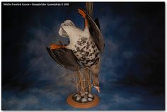 My next mount -  Whitefront Goose