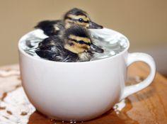 http://richardaustinimages.files.wordpress.com/2013/07/cooling_down_animals_15.jpg