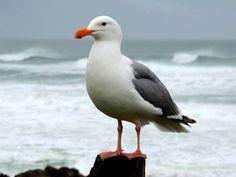 "Jonathan thinking to himself, ""Where'd the sun go? It was here a little bit ago? Beach Art, Ocean Beach, Beautiful Birds, Animals Beautiful, Sydney Beaches, Tree Canvas, Shorebirds, Mundo Animal, Am Meer"