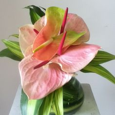 anthurium at Love in Bloom Key West