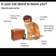 Is your cat about to leave you?