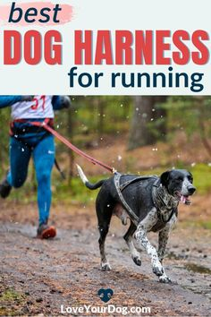 Looking for the perfect dog harness to use when you go take Fido running? There are many factors to consider, including comfort, durability, reflective stitching, and more. In this article, we review our favorite harnesses for running canine companions. Potty Training Tips, Best Dog Training, Big Dog Little Dog, Big Dogs, Puppies Tips, Dogs And Puppies, Train Information, The Perfect Dog, Dog Items