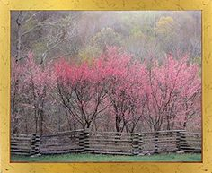 Landscape Wall Decor Redbud Tree Grove in Bloom Natchez Trace Parkway Art Print Poster