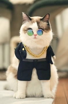 rich & handsome cat