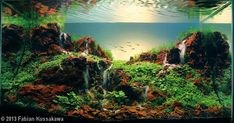 These are aquariums. This is the art of a aquascaping. - Album on Imgur