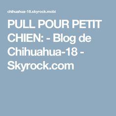 PULL POUR PETIT CHIEN: - Blog de Chihuahua-18 - Skyrock.com
