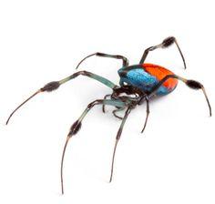 Longjawed Orb Weaver Spider