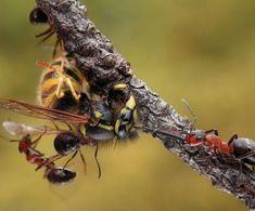 Macro Photography - Ants | Animal
