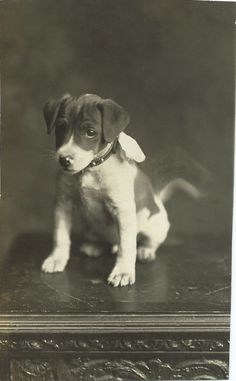 c.1910 RPPC of adorable puppy with a bow attached to his collar. Looks like he couldn't help wagging his tail. From bendale collection
