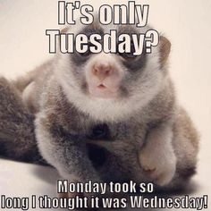its only tuesday meme - Yahoo Search Results Tuesday Quotes Funny, Tuesday Humor, Its Friday Quotes, Sunday Quotes, Taco Tuesday, Work Memes, Work Quotes, Work Humor, True Quotes