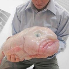Rare deep sea creature not seen by human often .. Blobfish