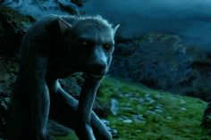 Harry Potter Lupin Werewolf