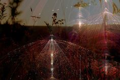 BIOSPHERE by Tatiana Plakhova, via Behance