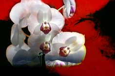 Orchid with passion. Click image to view art and purchase.  http://www.yourphotofantasy.com  http://angelika-drake.artistwebsites.com