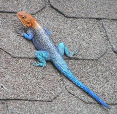 Beautiful lizard.