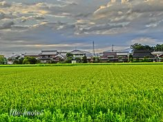 Tambo (Rice Field) by MeAmore5, via Flickr  HRD