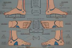 Image result for top foot reflexology chart