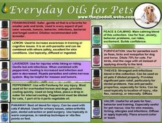 How to use essential oils for your pets