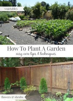 How to Plant a Garden the Easy Care Way Vegetable garden and