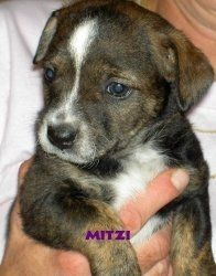This is the photo that grabbed our hearts and convinced us to adopt Mitzi from PUPS Inc. in Hopatcong, NJ.  http://members.petfinder.com/~NJ478/home.htm#