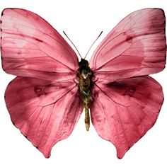 Maroon/pink butterfly | Wedding Style Inspiration by Marigold Paper